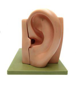 utiliza la oreja para escuchar al cliente